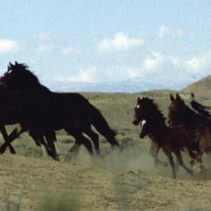 Run with the Mustangs.